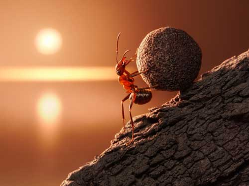 Ant pushes a boulder uphill